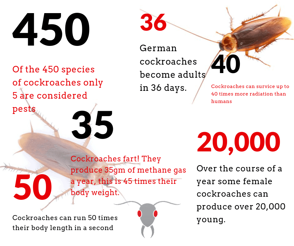 Gold Coast Pest Inspector Info Graphic